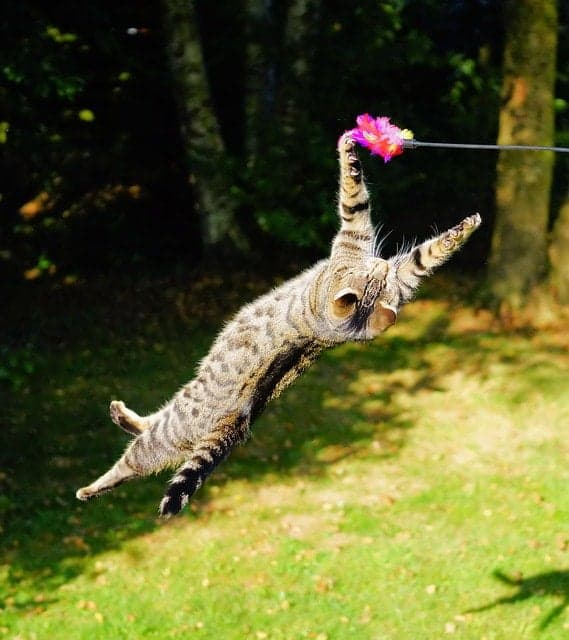 cat-flying-in-the-air
