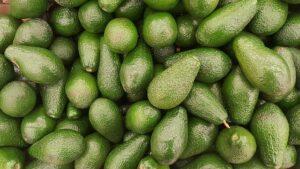 California Avocado courtesy of pixabay